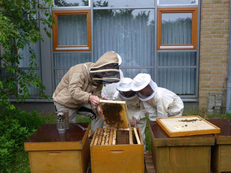 Bienen in der Schule